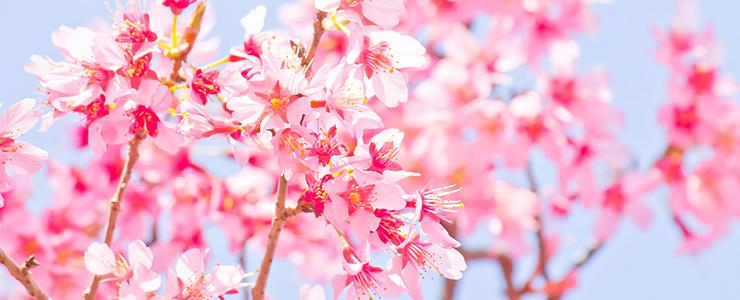 桜の季節・春のデート